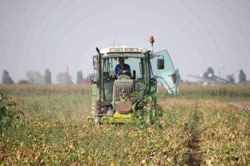 Coronavirus, contagi sul lavoro: agricoltori i meno colpiti