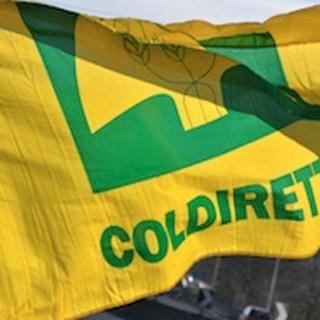 """Coldiretti lancia l'allarme: """"Sugar e plastic tax vanno bloccate"""""""