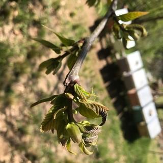 Anche le api danneggiate dalle gelate di inizio aprile: Aspromiele chiede lo stato di calamità