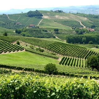 In Piemonte la sesta conferenza mondiale del turismo enologico
