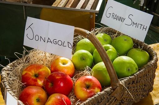 """Confagricoltura Piemonte: """"Uno studio statunitense rivela che chi mangia mele diventa intelligente"""""""