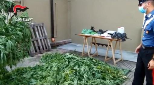 Pensionato si ricicla come spacciatore: in casa nascondeva marijuana e una piccola coltivazione di cannabis [VIDEO]